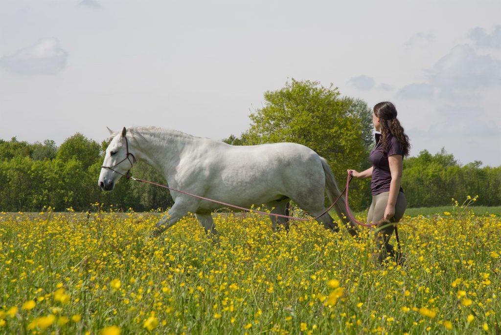 Immediate Response Therapy voor paarden