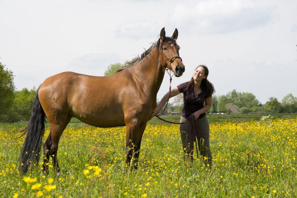 starten van jonge paarden