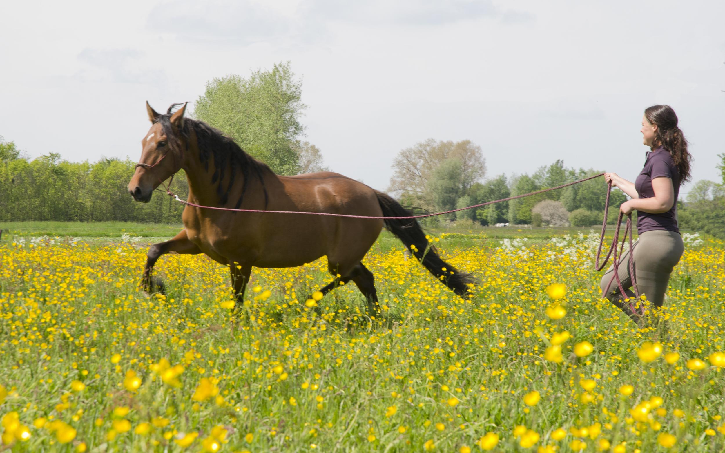 respect en vertrouwen bij paarden