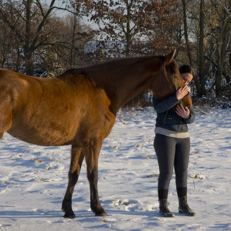 acupressuur en sportmassage bij paarden
