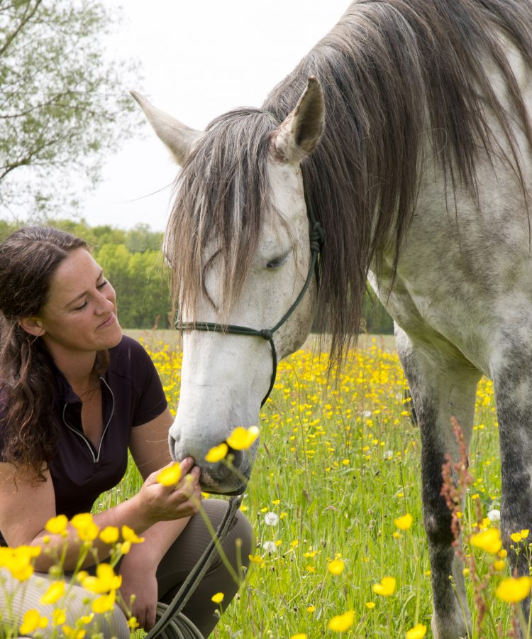 Amikoo paarden Aglaia